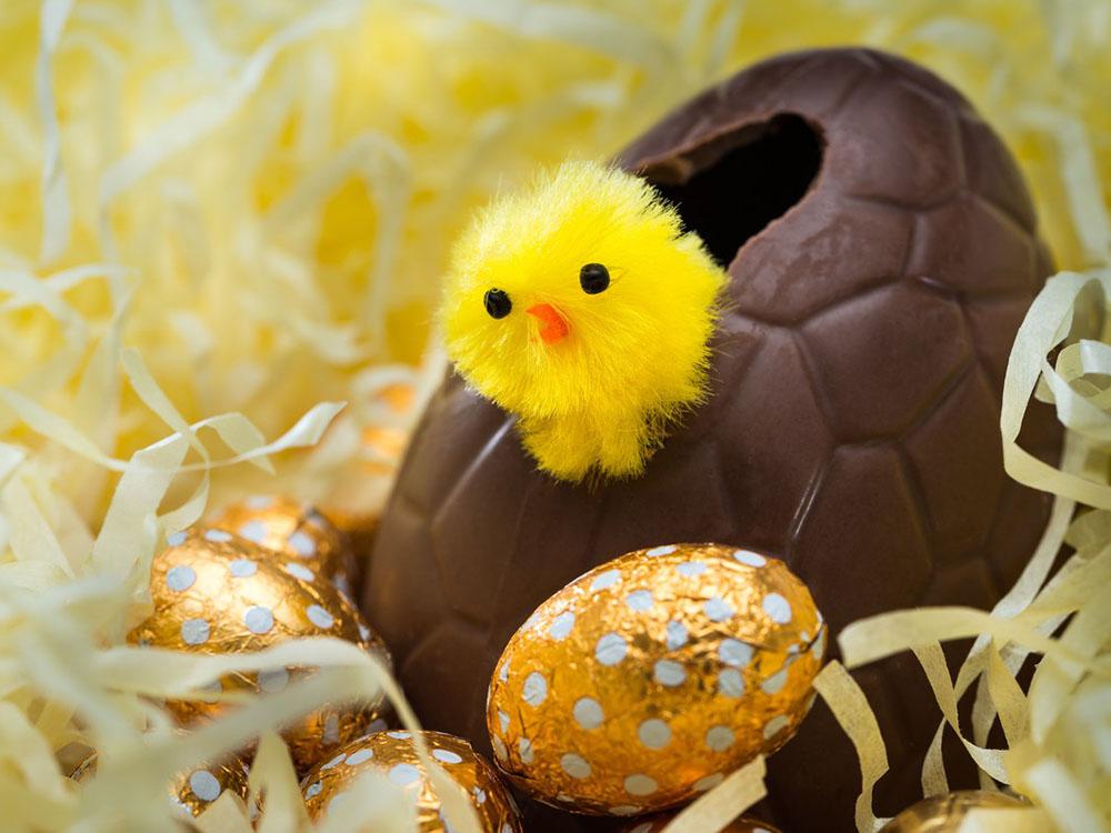 Шоколадное яйцо КРОКО